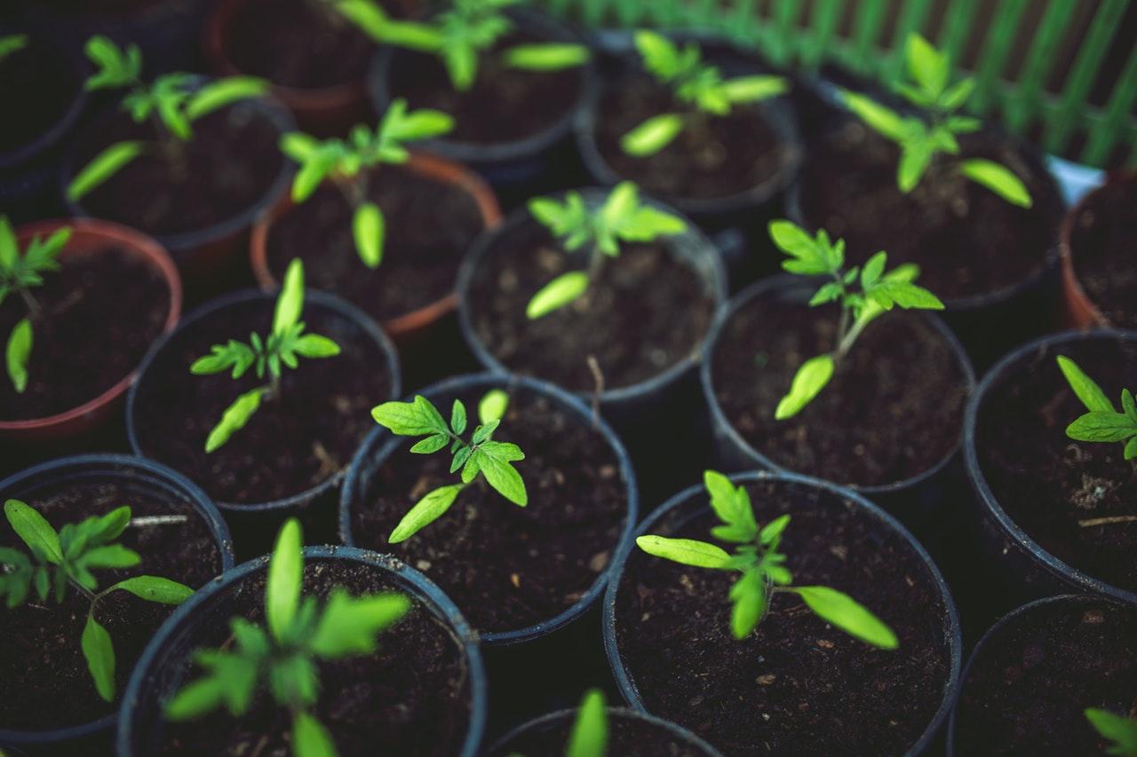 Duurzaam koken: zelf kruiden verbouwen