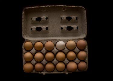 verschil bruine witte eieren