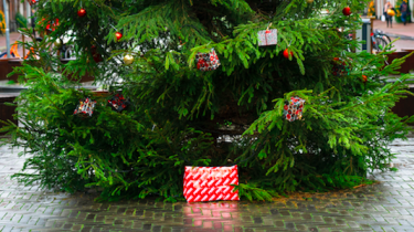 febo-kerstboom