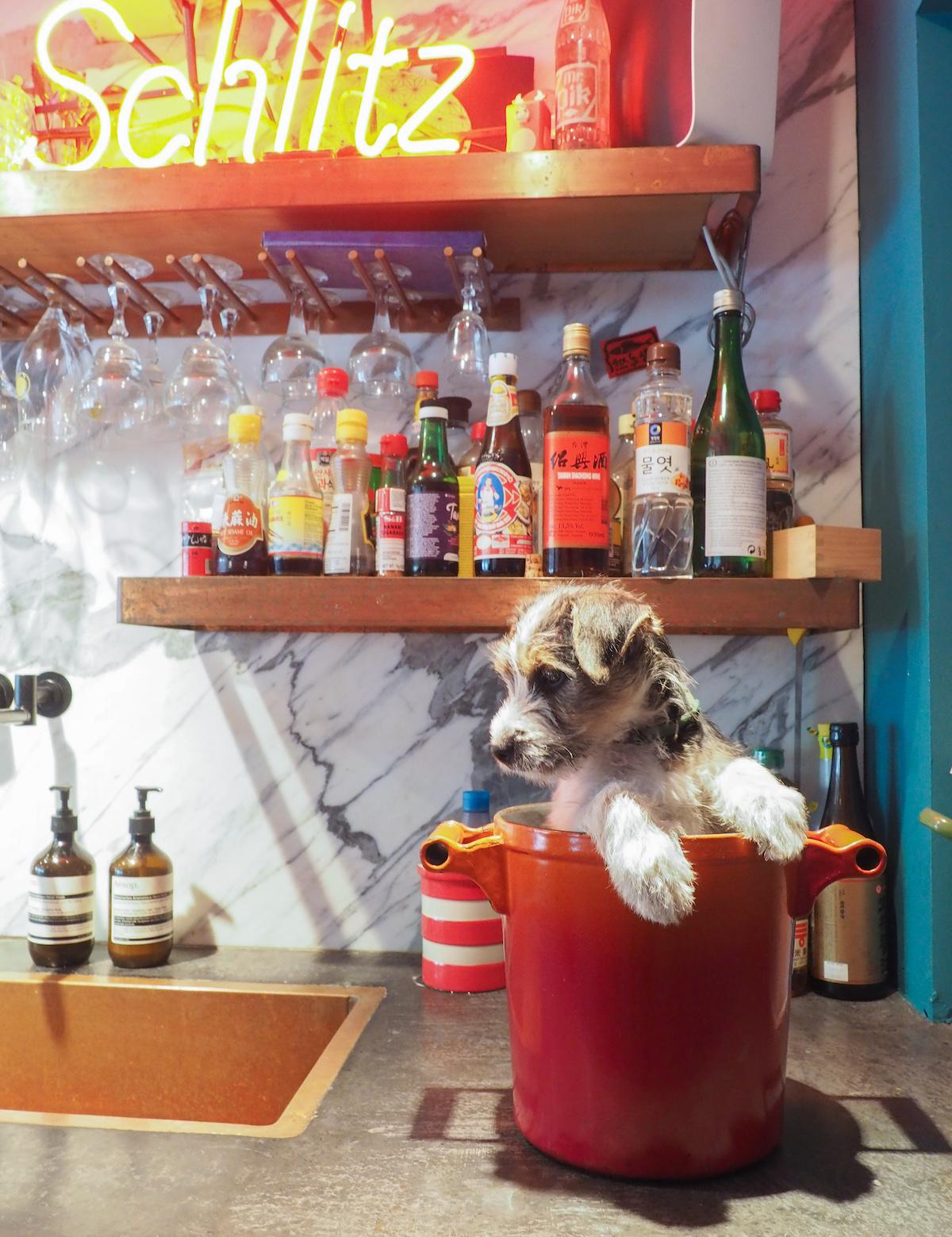 Hughie in de keuken van Yvette van Boven
