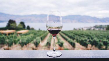 biologische of biodynamische wijn